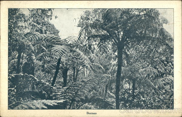 Jungle in Borneo Sandakan Southeast Asia