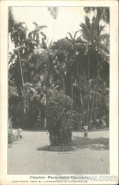 Ceylon - Paradenia Gardens Peradeniya Ceylon (Sri Lanka)