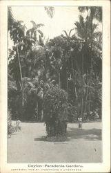 Ceylon - Paradenia Gardens